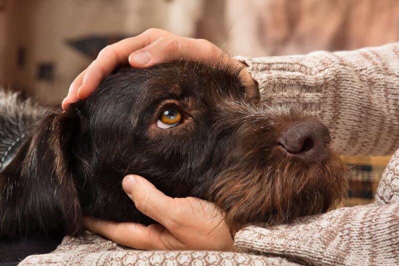 Quer ter um cão? A culpa pode ser da genética