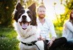 Efeito cocktail: cães conseguem 'filtrar' ruídos de fundo