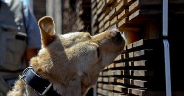 Natinga Project: empresa treina cães para identificar contaminantes no vinho
