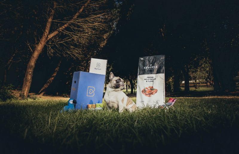 """Startup portuguesa concede """"licença de maternidade"""" paga aos colaboradores que acolherem cães"""