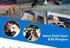 Formação em 'Bem-Estar canino em Hotéis, Creches e Associações' realiza-se em setembro