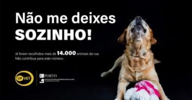 Hospital Veterinário da Universidade do Porto lança campanha contra abandono animal