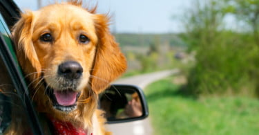 Vai viajar? Tudo o que precisa de saber para levar o seu animal