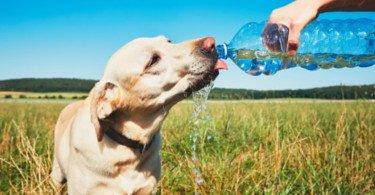 """""""Há que sensibilizar as pessoas para o sofrimento animal provocado pelo calor"""""""