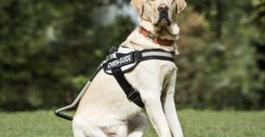 O seu cão já não precisa de o ver – ou ouvir – para receber ordens
