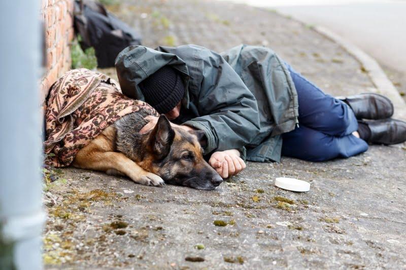Califórnia disponibiliza 5 M$ para cuidados veterinários aos animais dos sem-abrigo