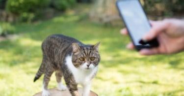 O seu gato ou cão é fotogénico? Isso pode encher-lhe o prato