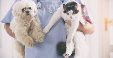 veterinário pequenos animais