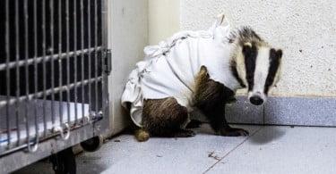Centro de Recuperação de Animais Silvestres de Lisboa já tratou 20 mil animais em 22 anos