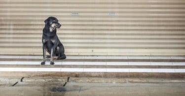 Madeira cria apoio financeiro anual para associações de proteção animal