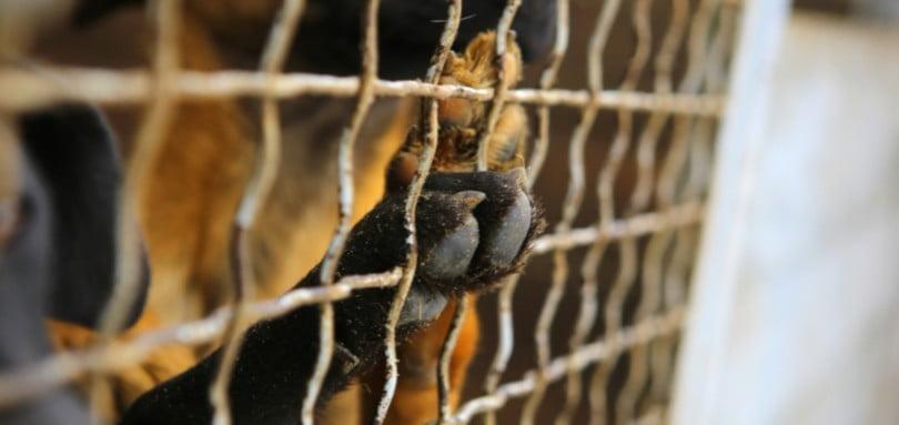 Madeira quer criar Provedoria do Animal