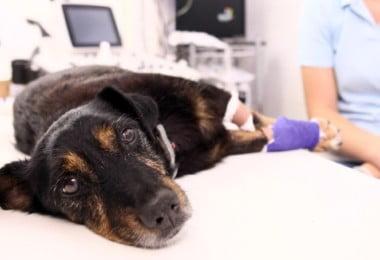 DGAV esclarece veterinários sobre Sistema de Informação de Animais de Companhia