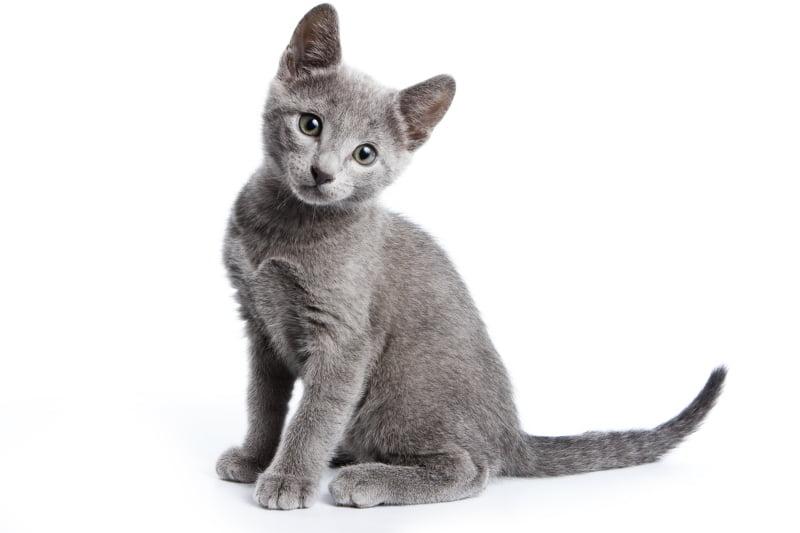 Câmara de Oeiras promove adoções no Dia Mundial do Gato
