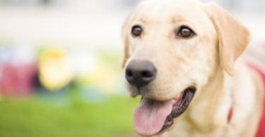 Estes cães vão a tribunal – e ajudam as testemunhas