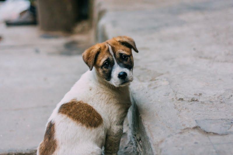Denúncias por maus-tratos e abandono de animais voltam a aumentar