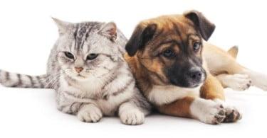 Banco Solidário Animal promove nova campanha de recolha de alimentação animal