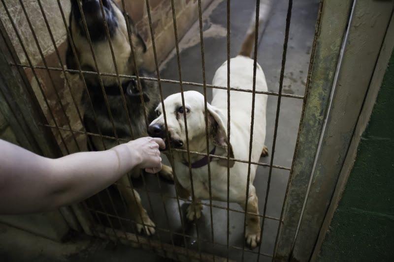 Construção do Centro de Recolha de Animais de Anadia prestes a arrancar