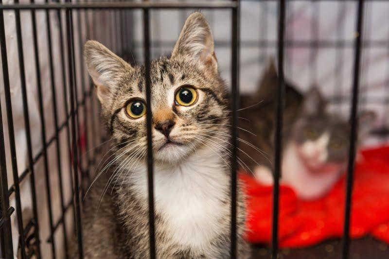 Municípios reforçam medidas para redução de população de animais errantes