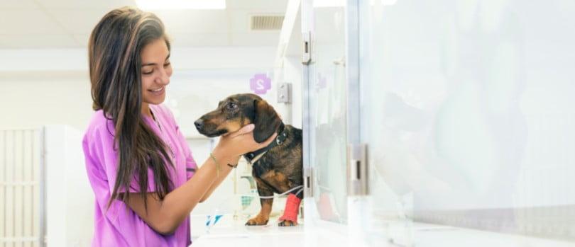 Haverá discriminação de género na medicina veterinária?