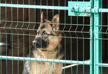 PAN quer subcomissão parlamentar para a proteção animal