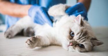 Câmara Municipal de Lisboa vai contratar médicos veterinários