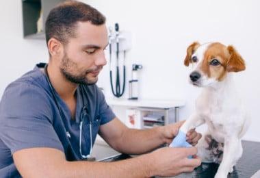 OMV volta a pedir fim do IVA a 23% para os serviços veterinários