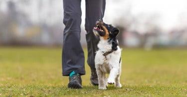 Instituto do Animal organiza workshops sobre Educação Canina