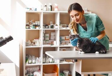 Há mais de 309 mil médicos veterinários na Europa, segundo a FVE