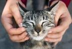 Os gatos têm mesmo expressões faciais, diz estudo