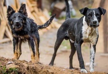 Novo caso de raiva canina em Espanha
