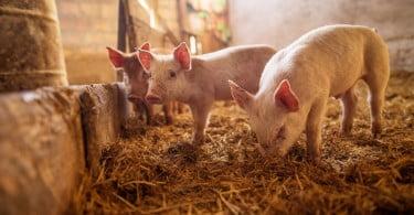 rotulagem bem-estar animal