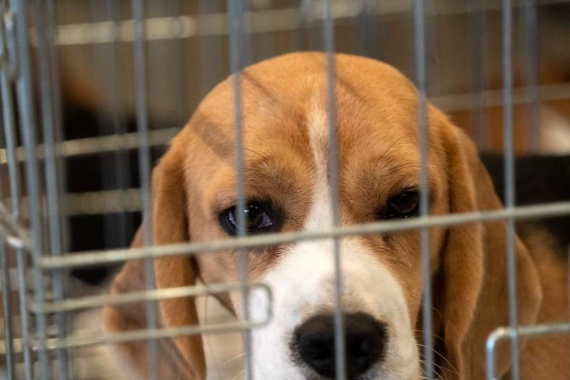 Universidade brasileira proibida de usar cães em experiências dentárias