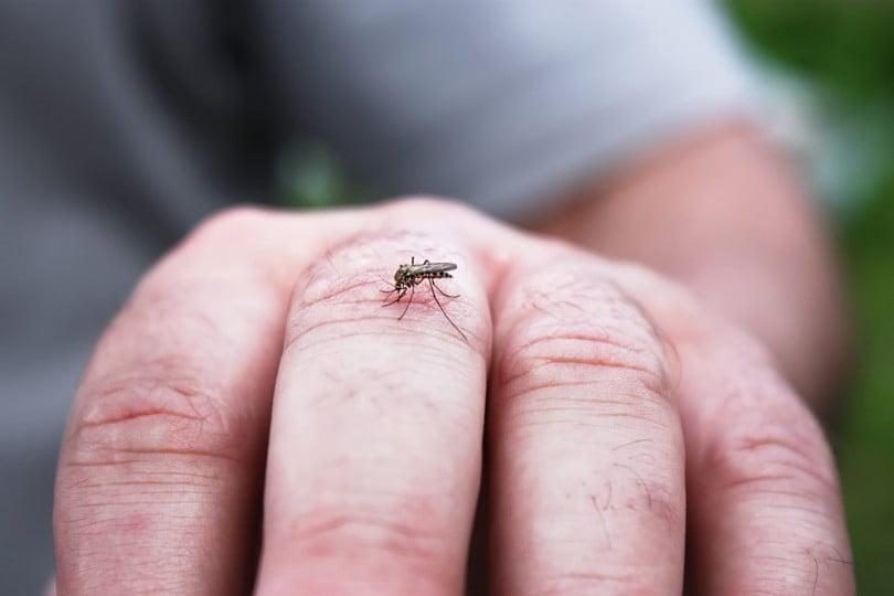 Descobertas centenas de novos vírus transmitidos por insetos