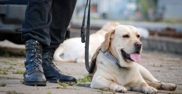 Cães treinados nos Estados Unidos para combater o cibercrime
