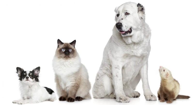 """SNMV acusa PS de querer """"inviabilizar"""" SIAC e criar imposto anual para animais"""