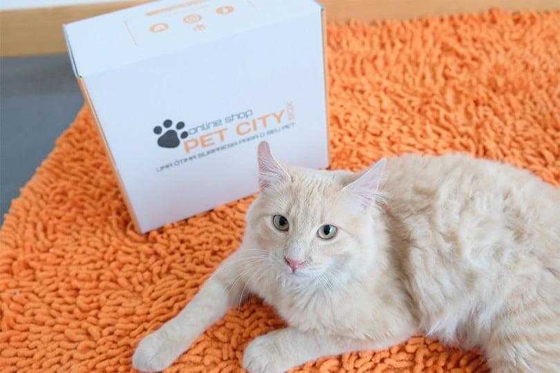 pet city box