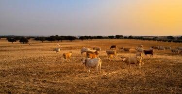 """Criadores consideram taxas sobre a carne """"um efetivo ataque ao mundo rural"""""""
