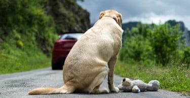abandono Animais de Companhia