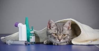 Europa publica relatório sobre suspeitas de efeitos secundários em medicamentos veterinário