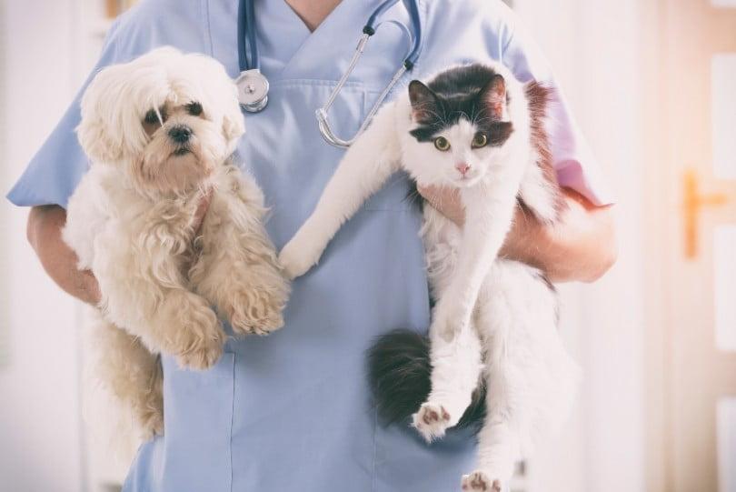 veterinário cao e gato