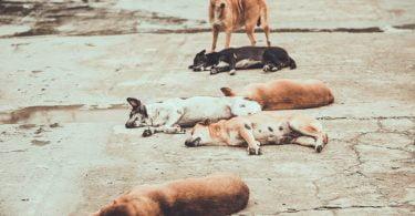 Ministra da Agricultura anuncia criação de Grupo de Trabalho para definir estratégia para animais errantes