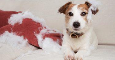 Vet Atual cão ansiedade separacao