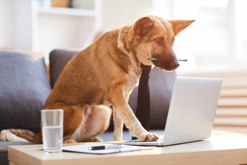 Vet Atual investimento setor animal