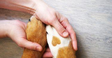 Vet Atual lavar patas cães covid