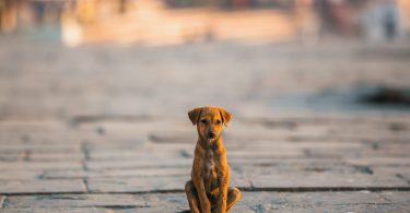 Abrigos de animais na China sobrelotados