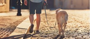 Posso passear o meu cão? Associação italiana emite recomendações para detentores de animaisPosso passear o meu cão? Associação italiana emite recomendações para detentores de animais