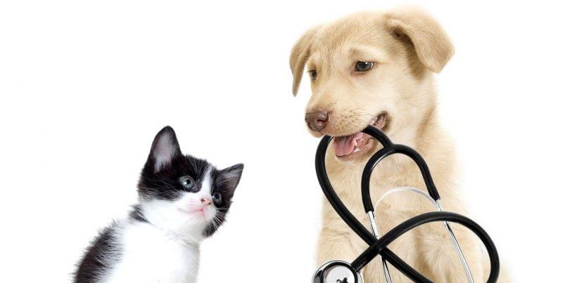 WSAVA publica Lista de Medicamentos Essenciais para Gatos e Cães