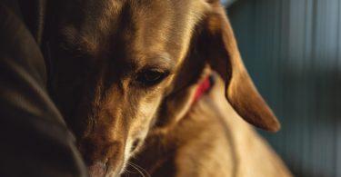 One Health: Clínica de Seattle trata pessoas e animais de estimação juntos