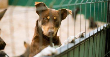 Vet Atual cães adotados online