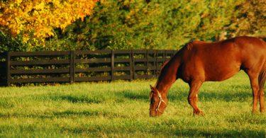 Estudo: pastagem setorial pode ajudar cavalos a manterem-se em forma